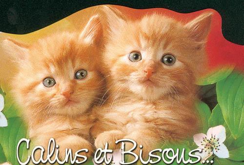 tchatche gratuit chat Sète